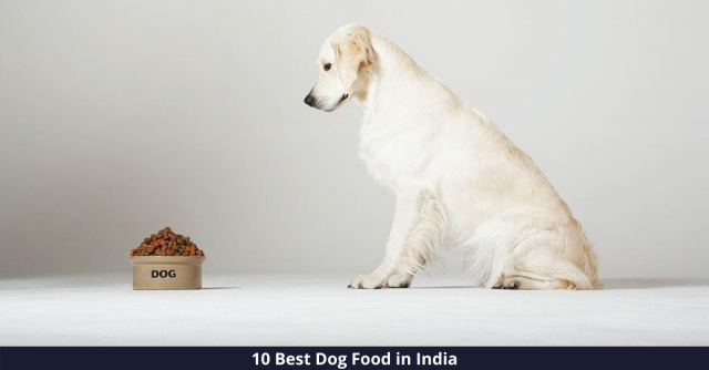 Best Dog Foods in India